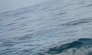 Humpback Whale Surprises Paddlers