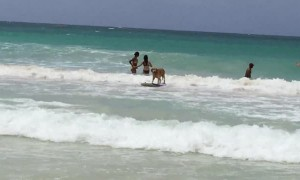 Dog shows off awesome surfing skills