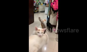 Excited cats come running for dinner in Taiwan