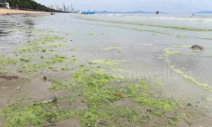 Popular Thai tourist beach turns GREEN in suspected algae bloom