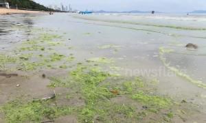 Popular Thai tourist beach turns GREEN in suspected algae bloom