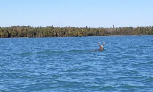 Buck Takes a Dip in Thunder Bay