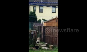 Scottish mum goes viral after screaming at dog to get down from fence
