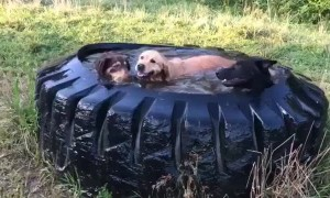 Dogs Cool off in Tractor Tire Water Tank
