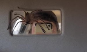 Sun Visor Spider Surprise