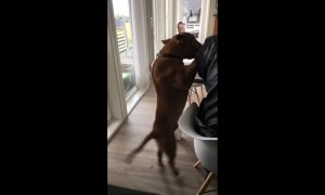 Clumsy dog slips and falls to the floor
