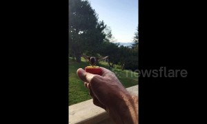Friendly hummingbird eats nectar straight from bird watcher's hand