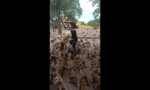 Hungry monkeys mob woman in Thailand