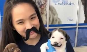 Cute little puppy shows off adorable mustache