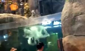 Aquari-fun