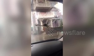 Strong wind caused by typhoon Lekima blows octopuses onto car windscreen in China