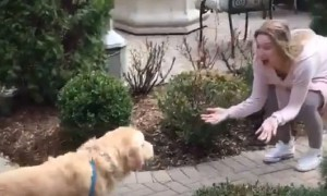 Dog can't keep his composure after owner returns home