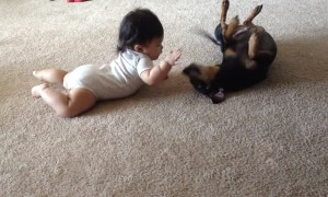 Baby adorably interacts with Chiweenie dog for the first time
