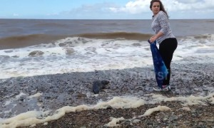 Volunteers rescue seal cub from beach in Lancashire, UK