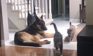 Cat Caught Cuddling with Dog