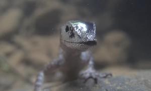 Lizard Breaths Beneath the Surface