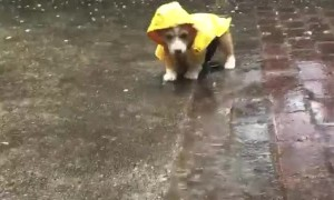 Safe from Rain, Not from Puddles