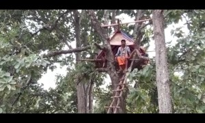 Indian villager forced to live in treehouse after elephants destroy his home