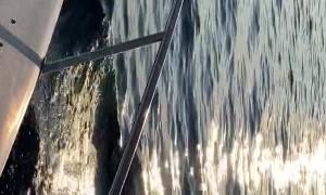 Pilot Whales Surround Yacht