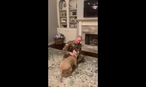 Overjoyed pitbull greets US owner after return from one-year deployment