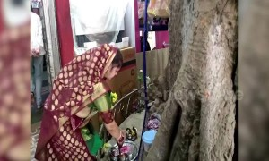 Hug of nature: Indian family builds house around 'sacred' fig tree