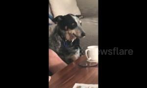 Australia dog makes funny face like he just realized something shocking