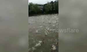 Hundreds of silver carp leap out of lake in China due to typhoon Lekima