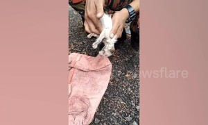 Heartwarming moment Malaysian fireman revives drowning kitten with CPR