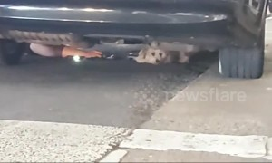 Heartwarming and intense moment runaway dog at Los Angeles airport rescued underneath car