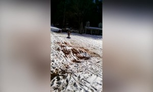 Sled Surfing Mud Pie