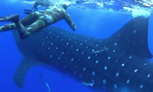 Scary moment shows massive shark crashing into diver