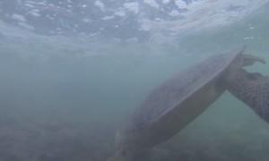 Sea Turtle Scare