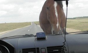 Horse Blocks Road Demanding Treats
