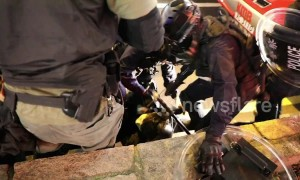Hong Kong riot police filmed in heavy-handed arrest of young demonstrator