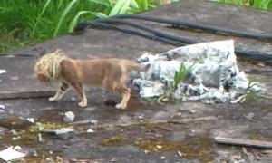 Cat with head stuck in bird's nest stumbles across Indonesia rooftops
