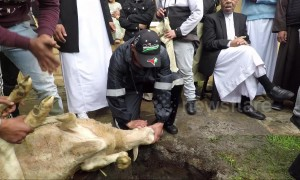 Muslims sacrifice sheep during Eid al-Adha