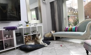 Saxophone Husky Sing-Along