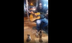 Guitar-Loving Kittens Crowd Around Street Performer