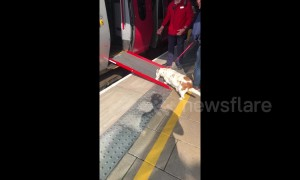 UK train conductor sets up ramp to help short-legged dog board train
