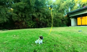 Drone Walks the Dog