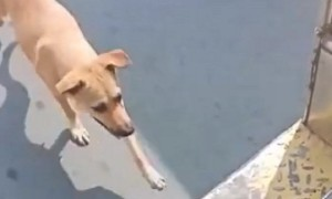 Stray Dog Chases Bus Until Driver Finally Adopts Her