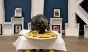 UK chef whips up DIY pizza for puppies