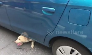 Happy moment traffic cops rescue dog stuck under car in Thailand