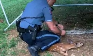 Police Officer comes to the rescue of a fawn trapped in a soccer net