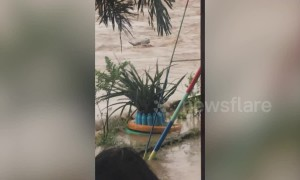 Locals battle to save drowning buffalo as Tropical Storm Bailu hits Philippines