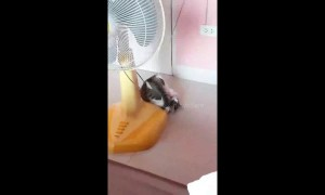 Cute kitten gets tangled in fan cable