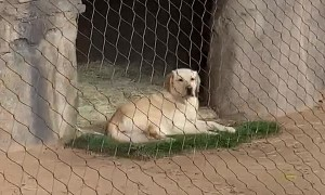 Support Dog Surprises Visitors to Cheetah Enclosure