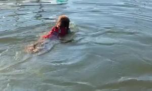 Doggo Dives Directly onto Friend