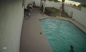 Dog Wipes out Diving into Pool