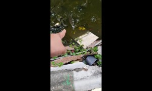 Strange fish leaps from water after being teased by stunned local